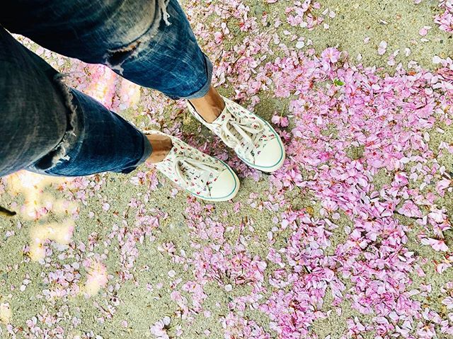 """Cherry Blossoms 🌸 """"Light as feathers, as fleeting as Zephyr, one moment they breathed pink, the next they faded"""" Quote ...."""