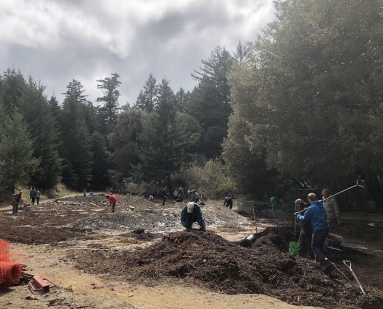 Volunteer planting day at the new entrance to Castle Rock State Park. Photo courtesy Rebecca Schoenenberger, California Nativescapes.