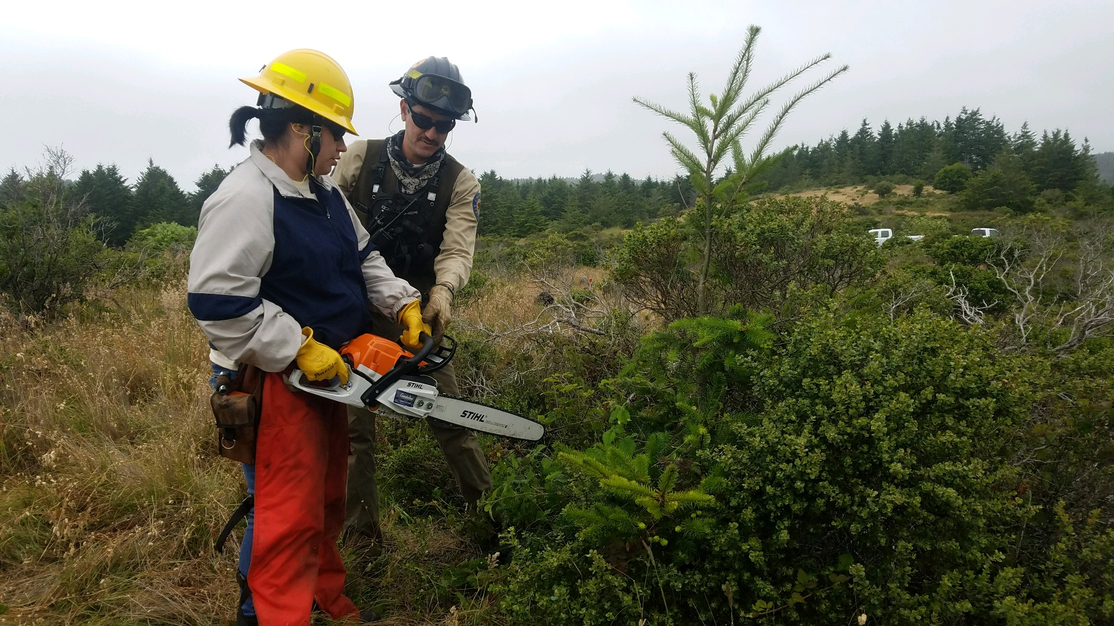 California State Parks staff member Juan Villarino trains Native Steward Natalie Garcia in proper chainsaw operation. Photo courtesy Jeanette Acosta.