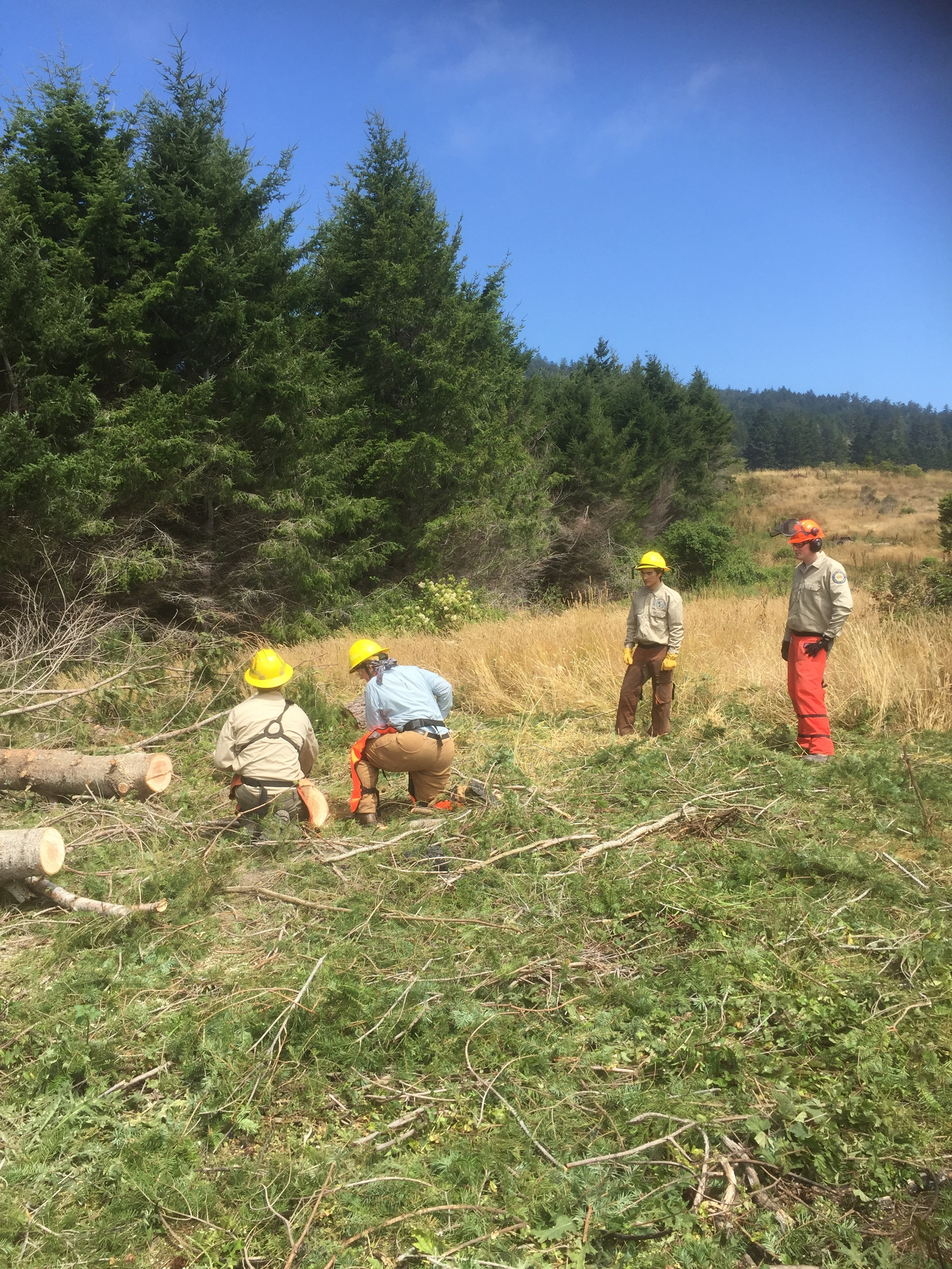 Esak Ordonez, second from right, observes safe chainsaw use during a training offered by State Parks staff.