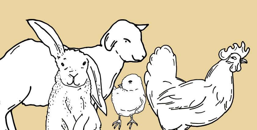 petting-zoo-website.jpg