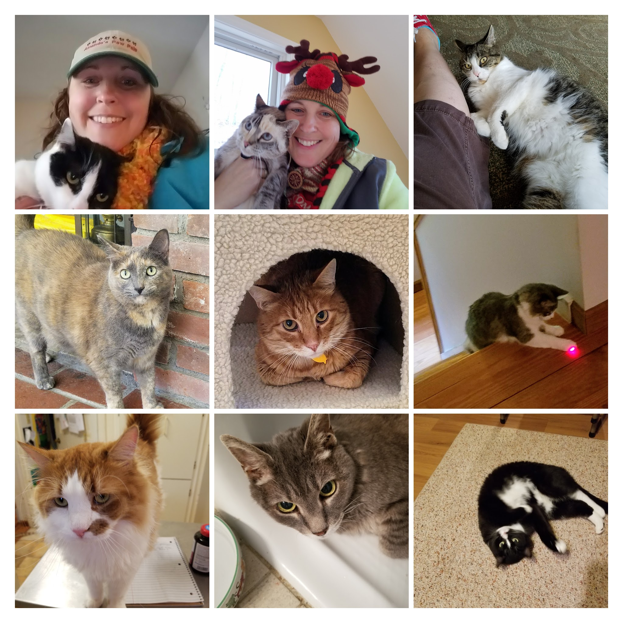 - A few of our paw pals