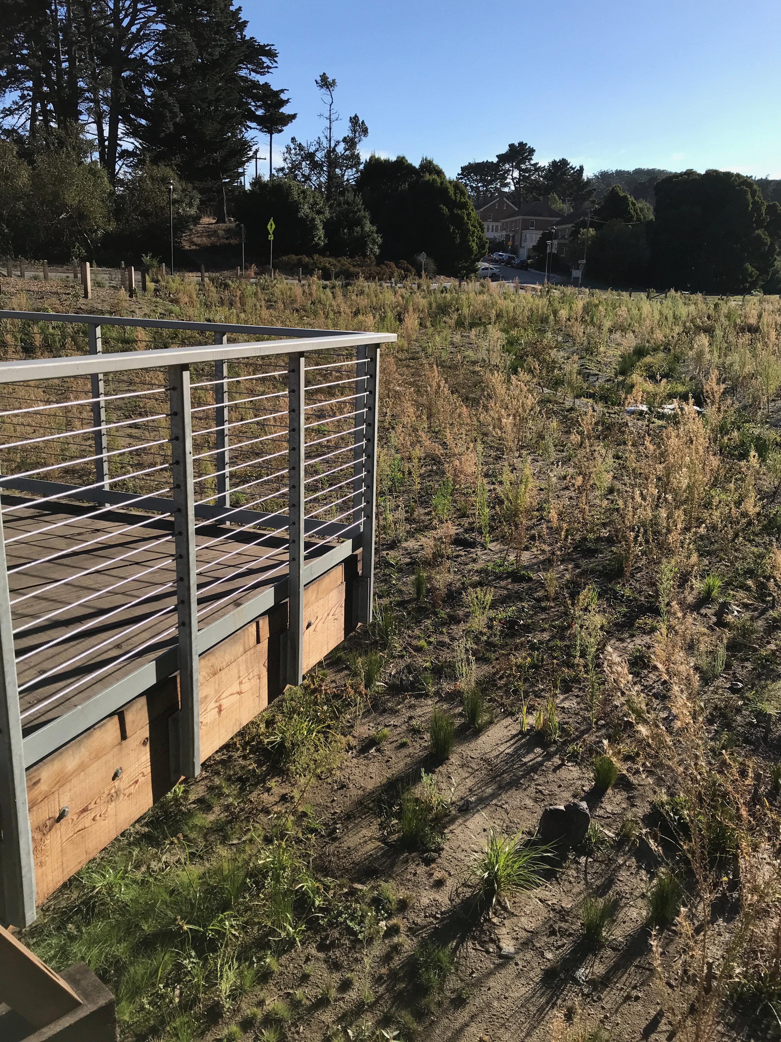 Macarthur meadow BWALK - 1.jpg