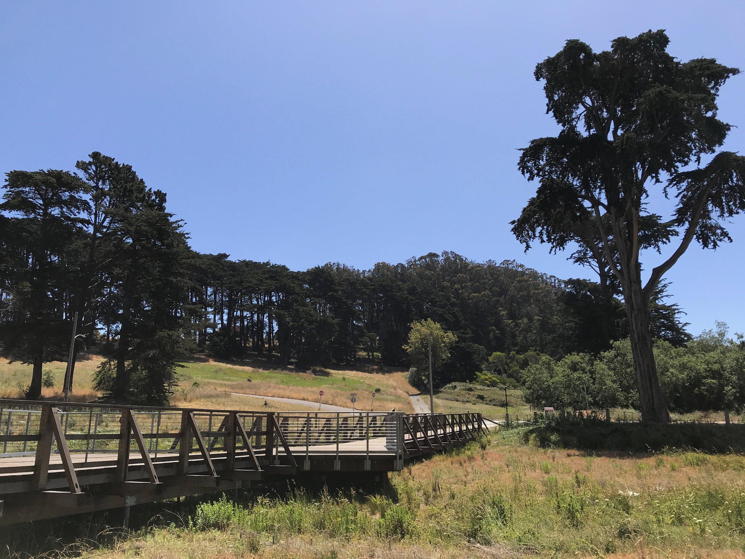 Macarthur meadow BWALK - 9.jpg