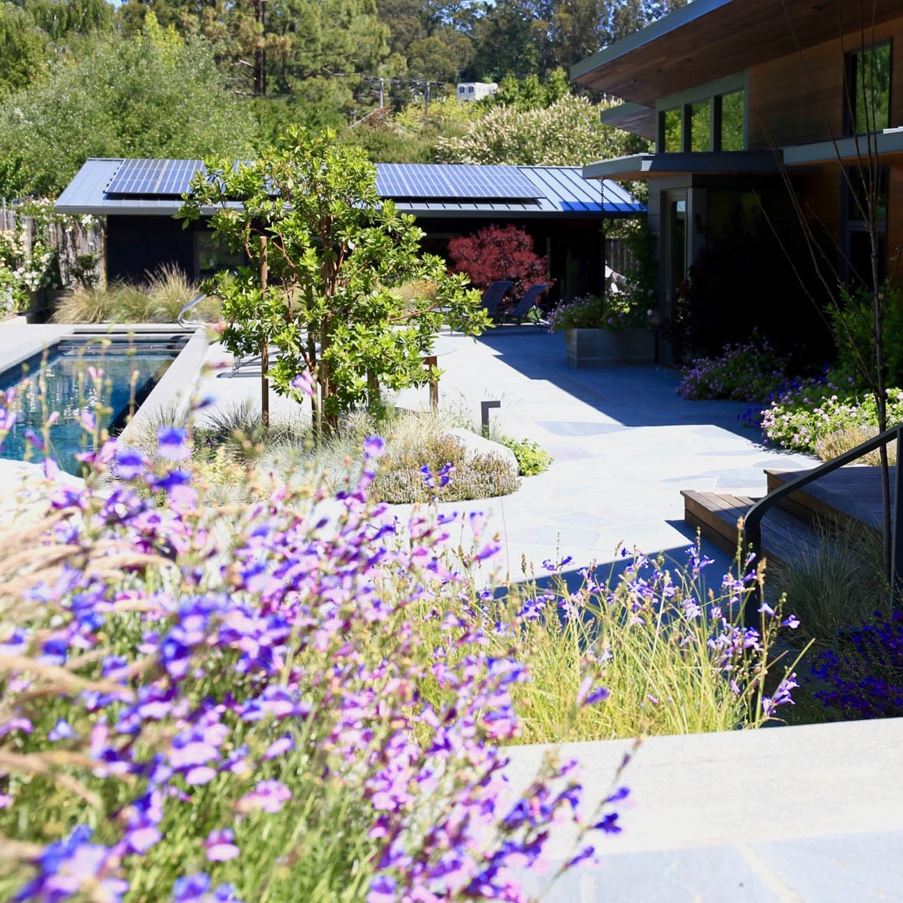 Mill Valley Residence - a new home for an artist & a writer