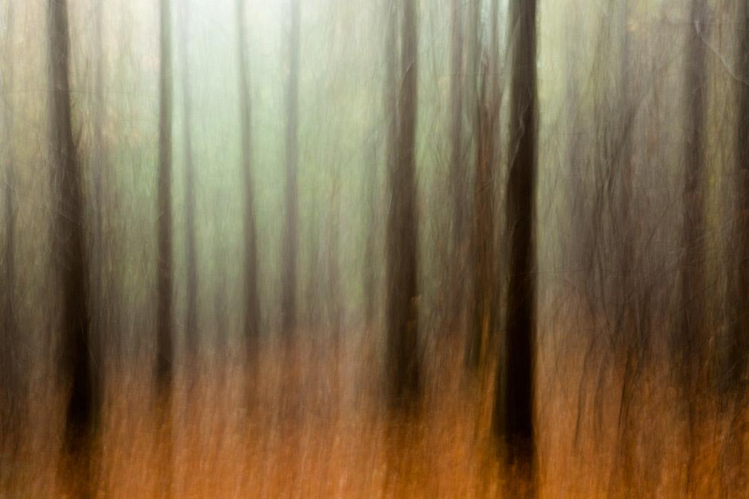 Treelines-8.jpg
