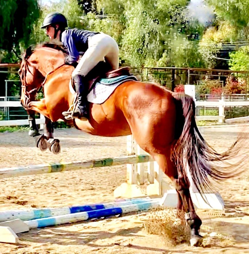horsetrainingjump_zack.jpg
