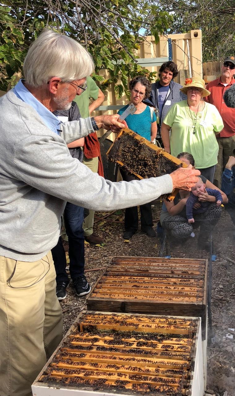 Gunther Hauk, showing the inner workings of the hive to workshop participants.