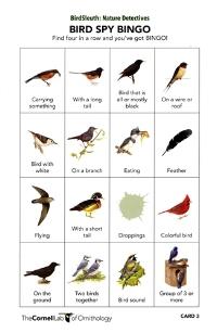 Bird Spy Bingo!