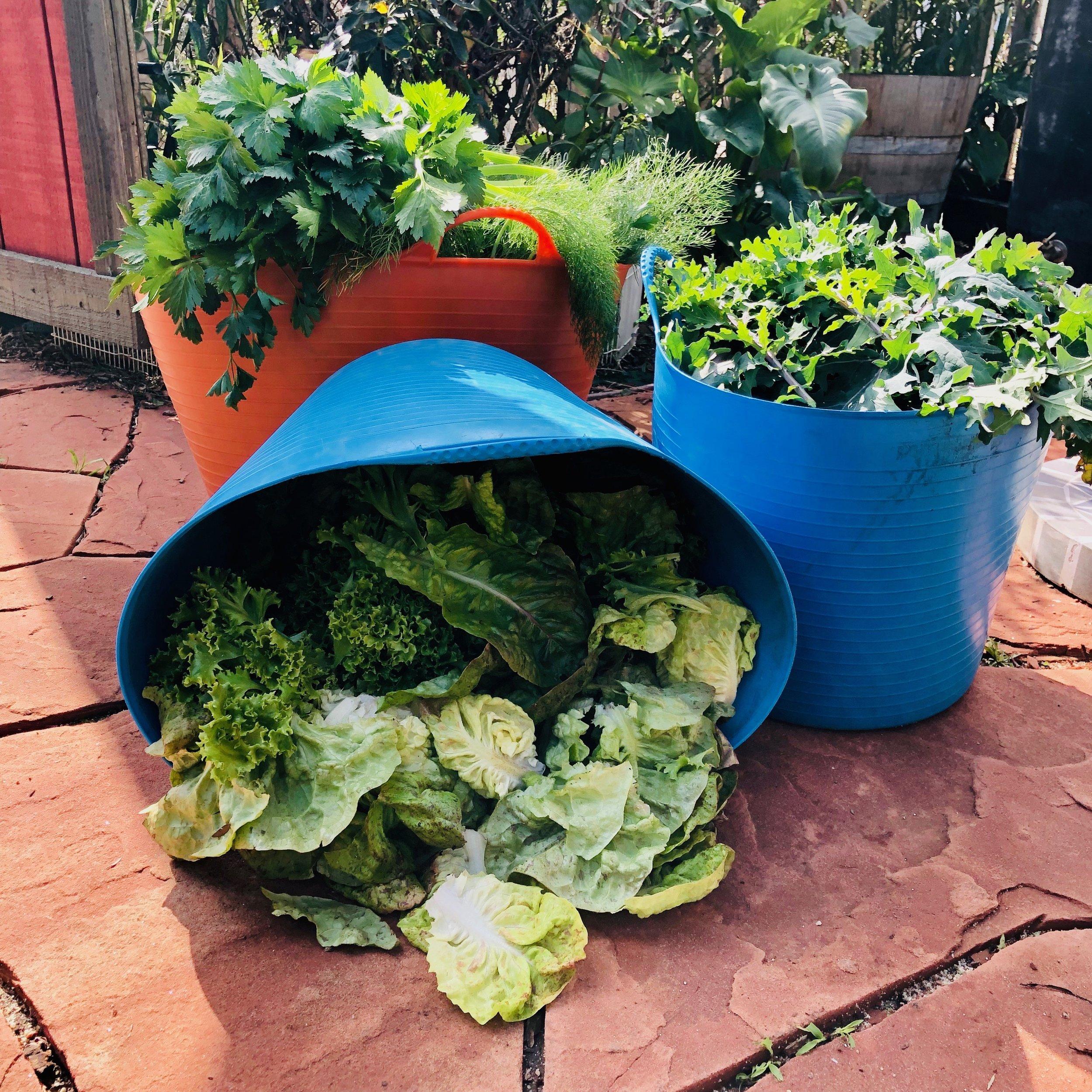 harvest bucket.jpeg
