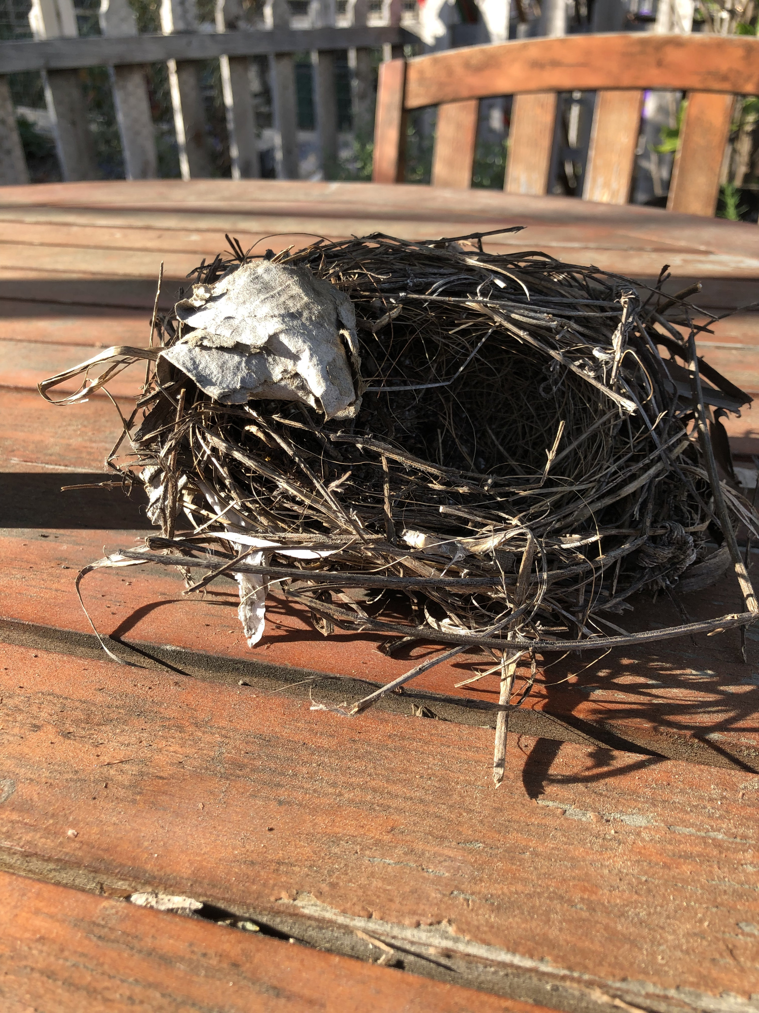 Found this sweet nest while removing some of last season's garden.