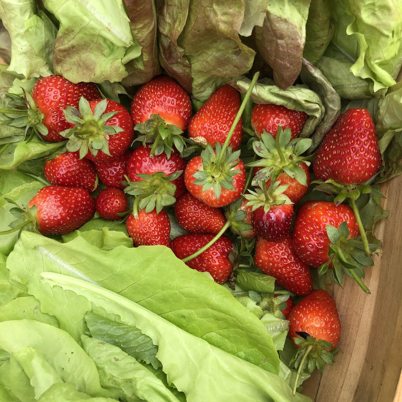 strawberry in lettuce.jpg