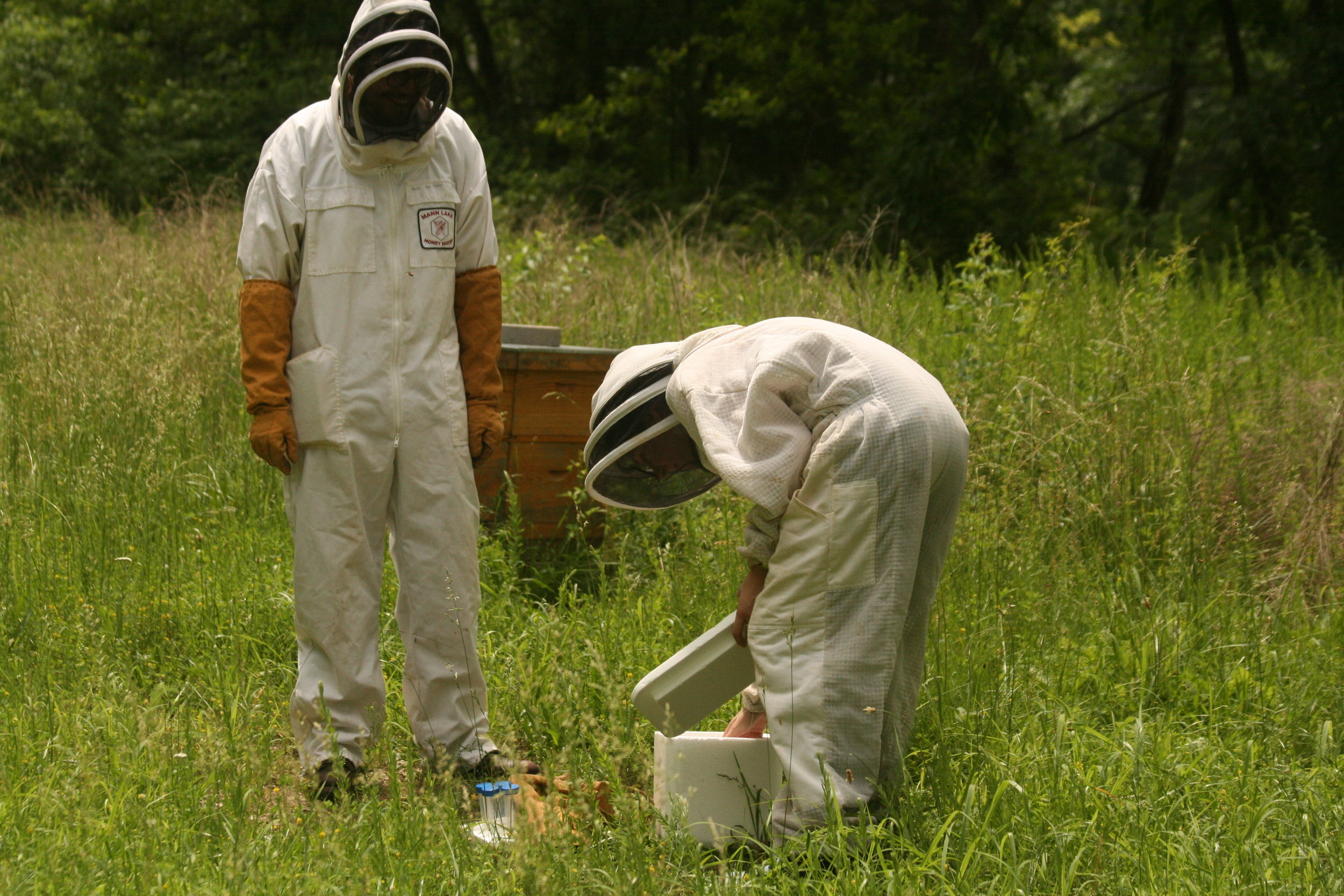 Harvesting bees to be tagged and studied.JPG