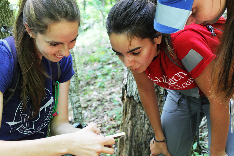 Tyson scientist Solny Adalsteinsson, left, helps Wash U sophomore Olivia Arias, center, and Webster Groves High School senior Julia Berndt check the photos on a motion-triggered wildlife camera.  CREDIT SHAHLA FARZAN | ST. LOUIS PUBLIC RADIO