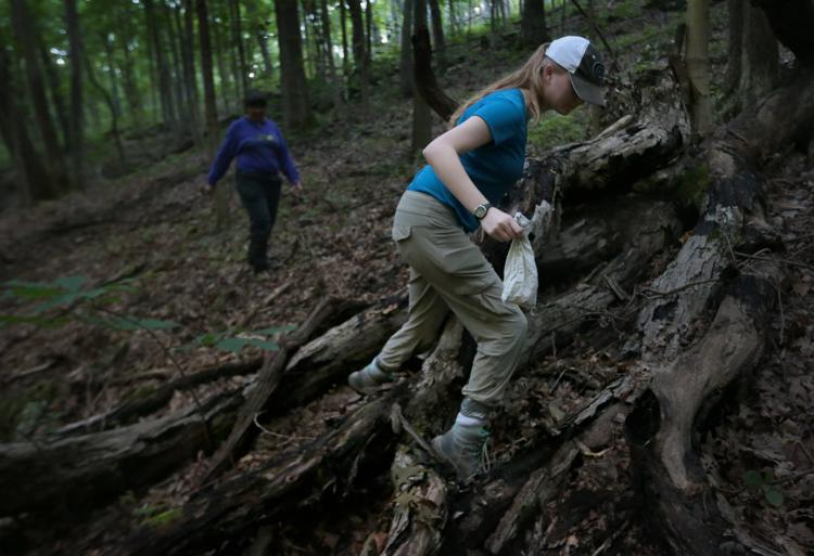 Tick & Wildlife research fellow Rachel Novick carries a netted bird in a linen sack back to the research area to collect data and to comb for possible ticks on Wednesday, July 31, 2019, at Tyson Research Center. Transporting the bird in a breathable bag reduces stress. Photo by Laurie Skrivan,  lskrivan@post-dispatch.com