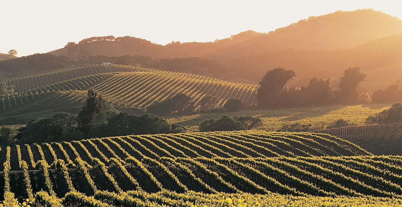 Napa | Sonoma - Wine Tour Limo Service