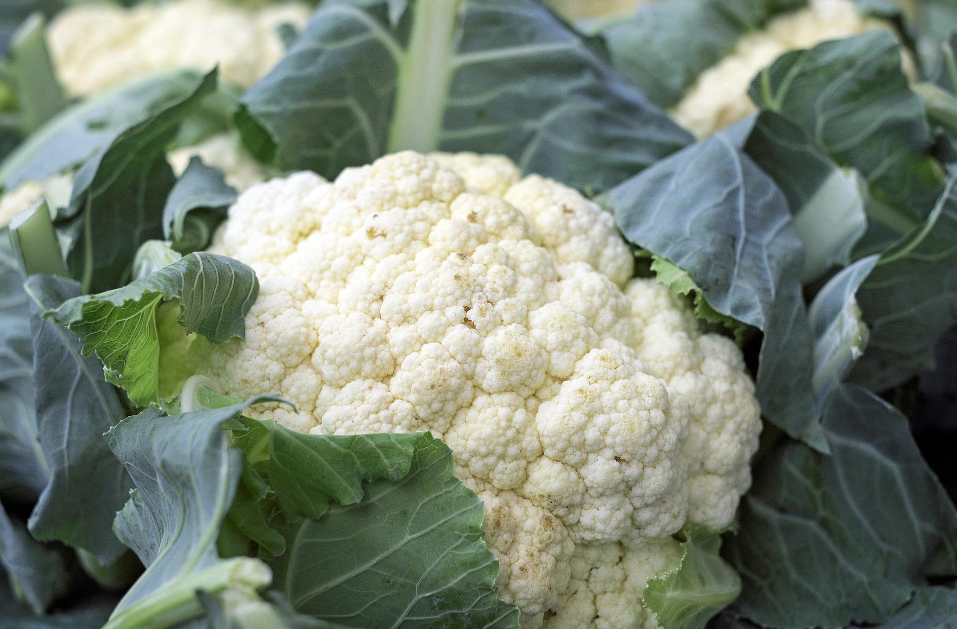 cauliflower-1465732_1920.jpg