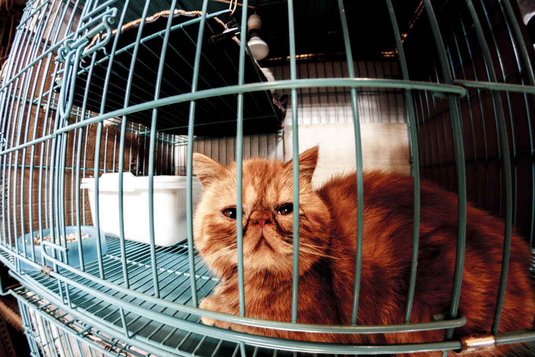 A cat in a cage, Shaghai, China