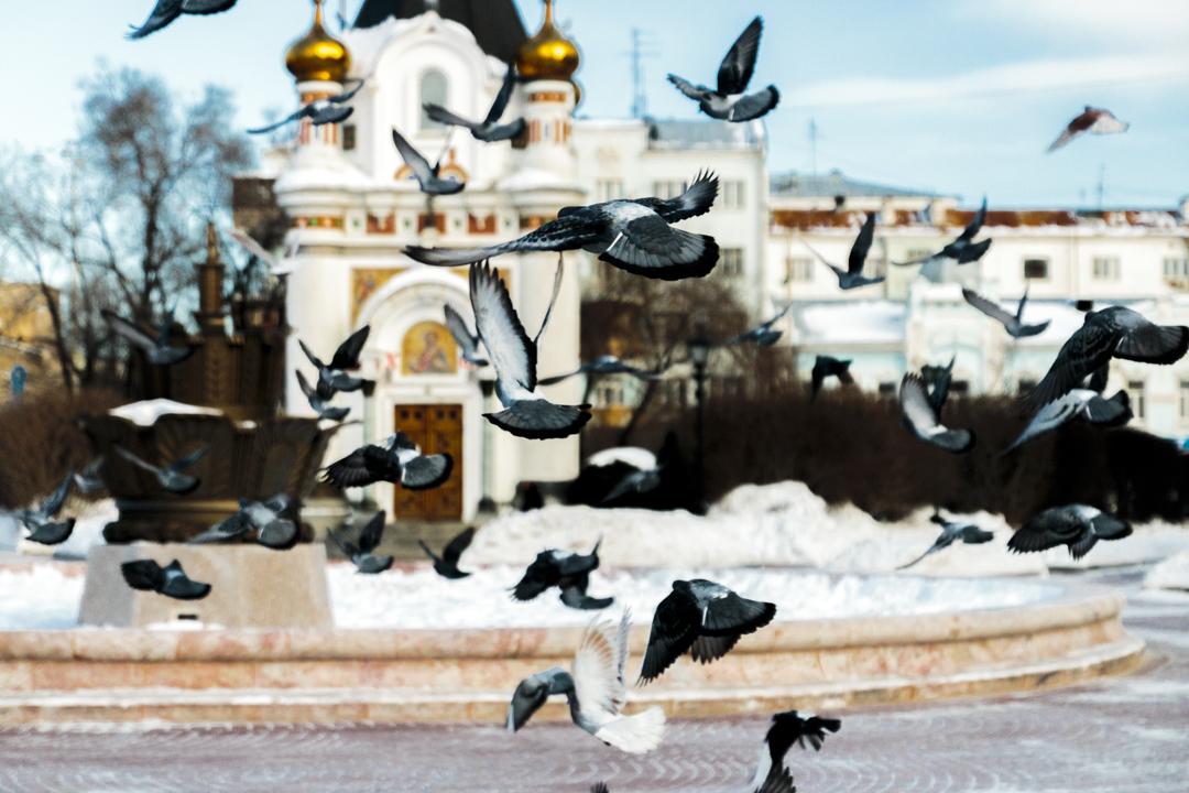 Pigeons, Iekatrinbourg, Russia