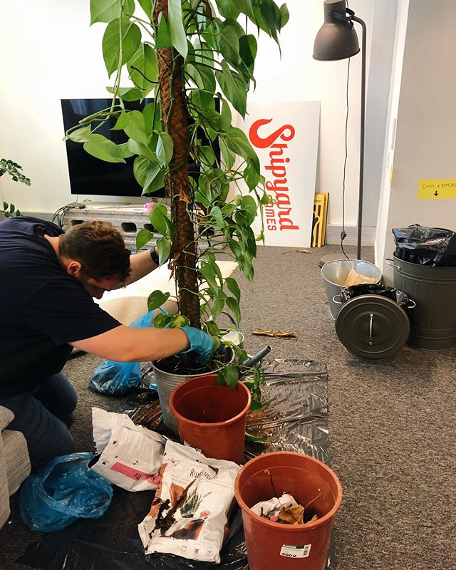 Who needs a holiday when you can do gardening at the office 🤷🏼♀️🌱 #summer #lifehacks #shipyardgames #officelife #gamedev