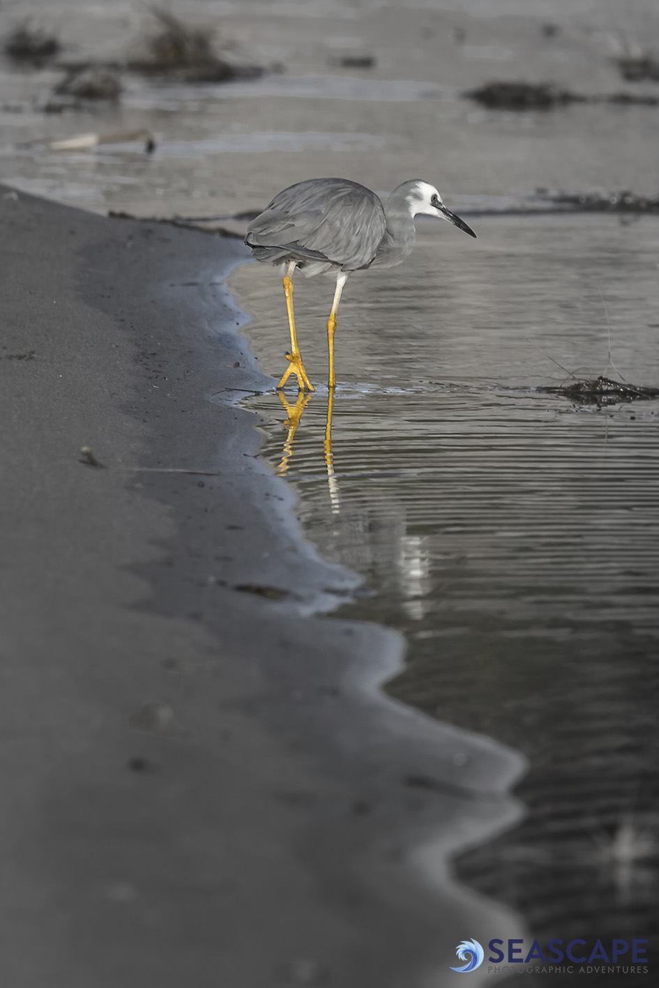 Heron watermark.jpg