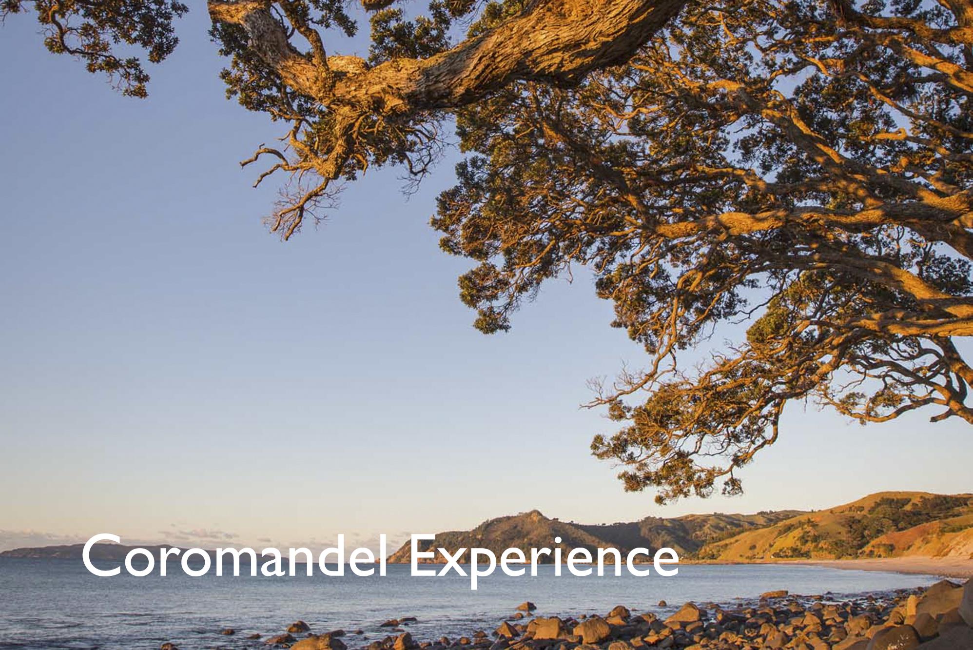 Coro Experience.jpg