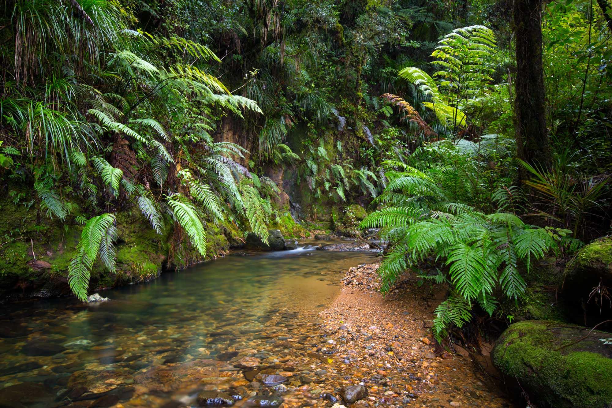 Forest Scene 1.jpg