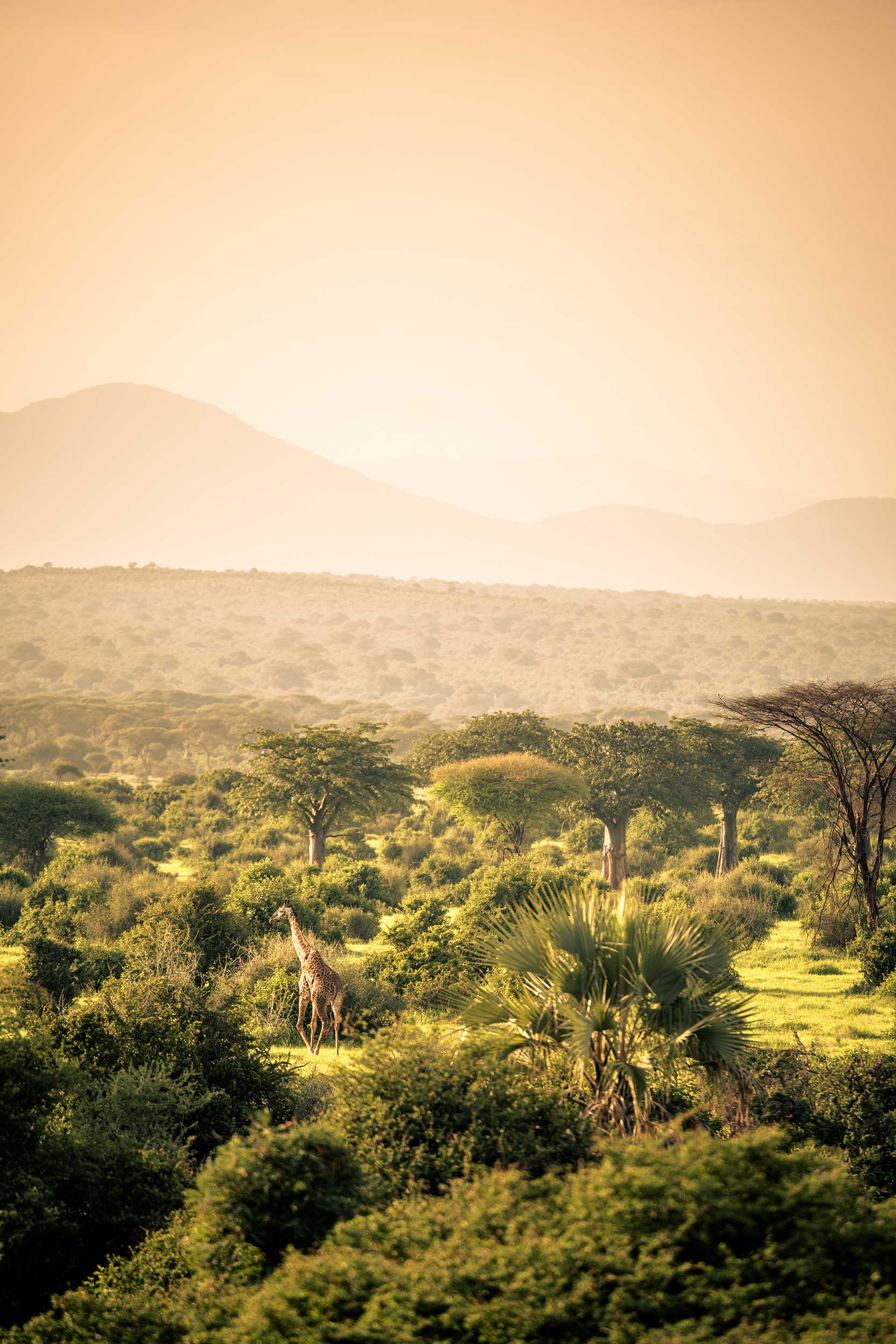Untold-journal_Tanzania_20180211-07.jpg