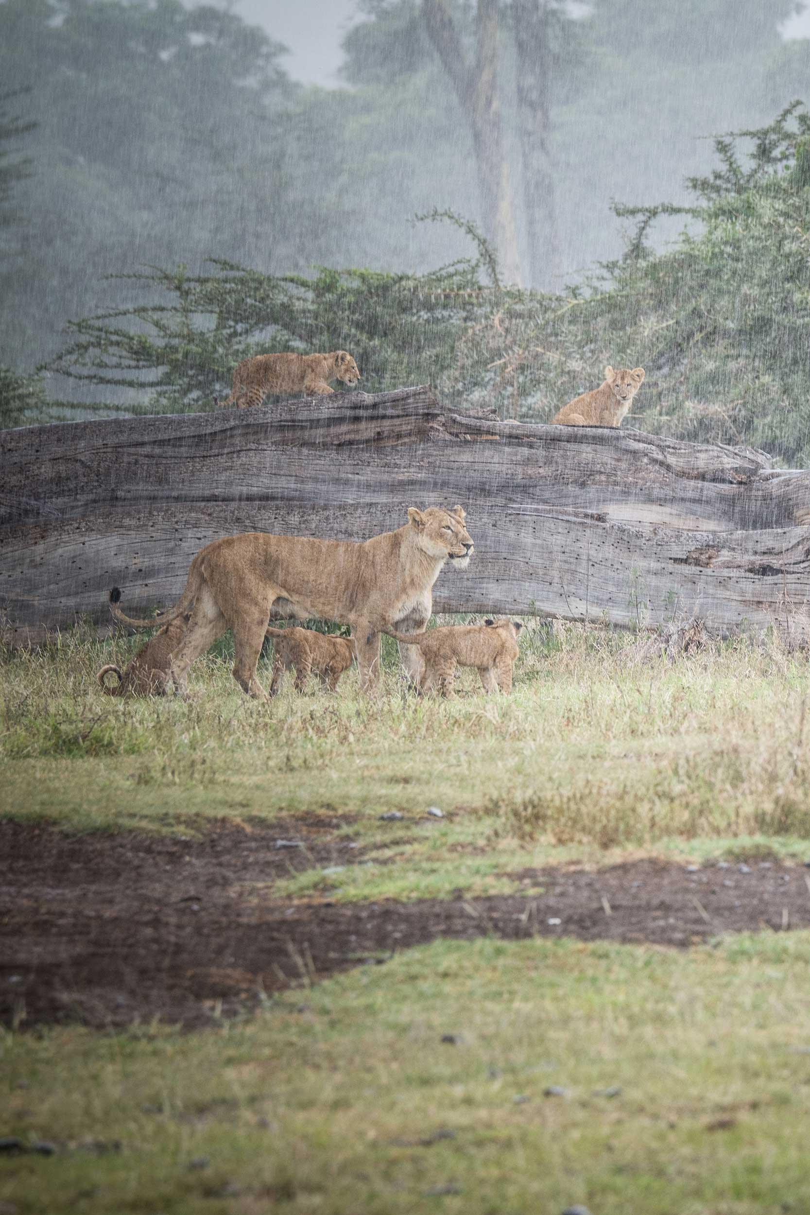 UNTOLD-Journal-Tanzania-008.jpg