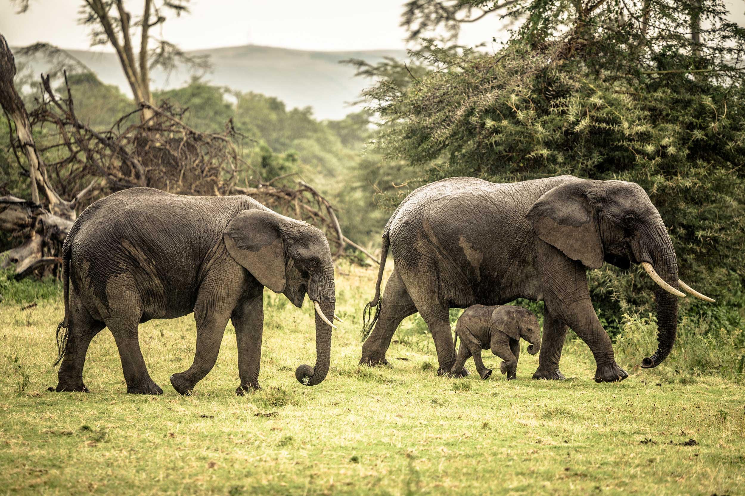 UNTOLD-Journal-Tanzania-013.jpg