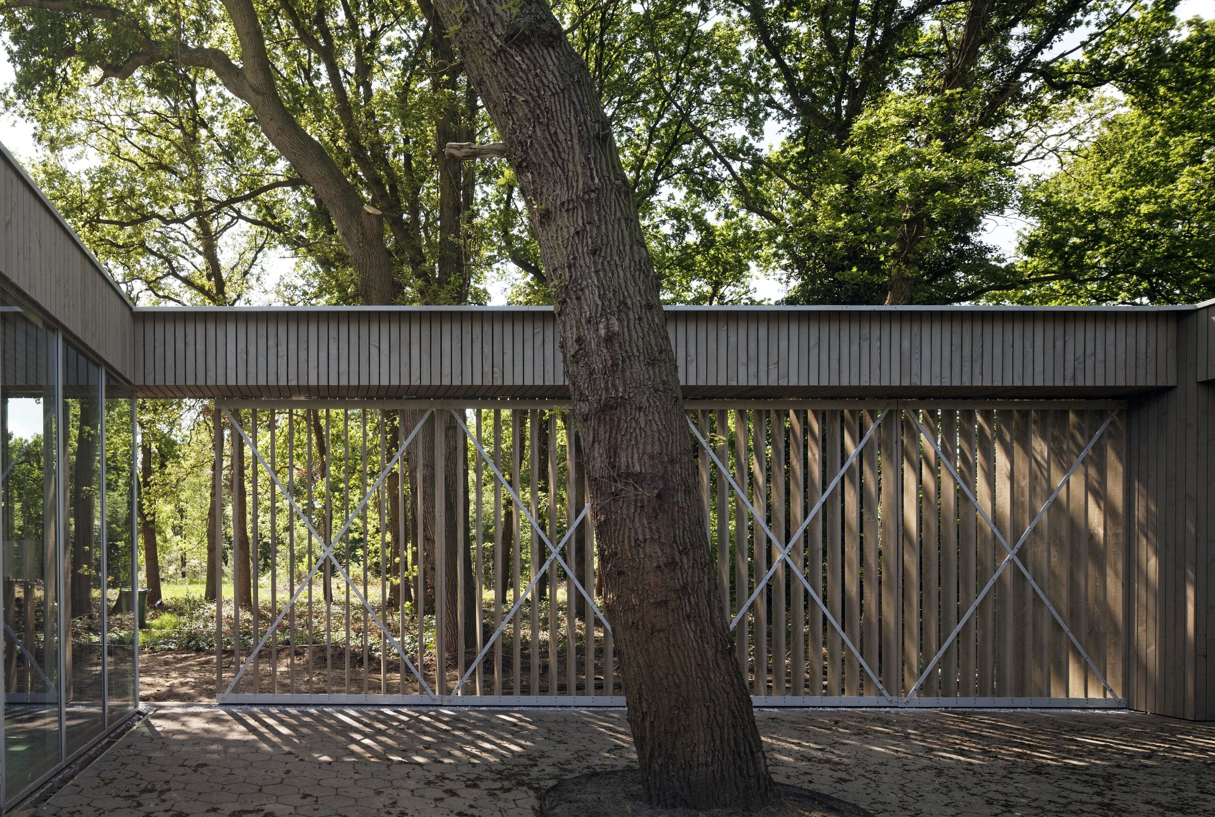 oak tree surrounded by a pergola with sunscreens offering a filtered view on the surrounding forest