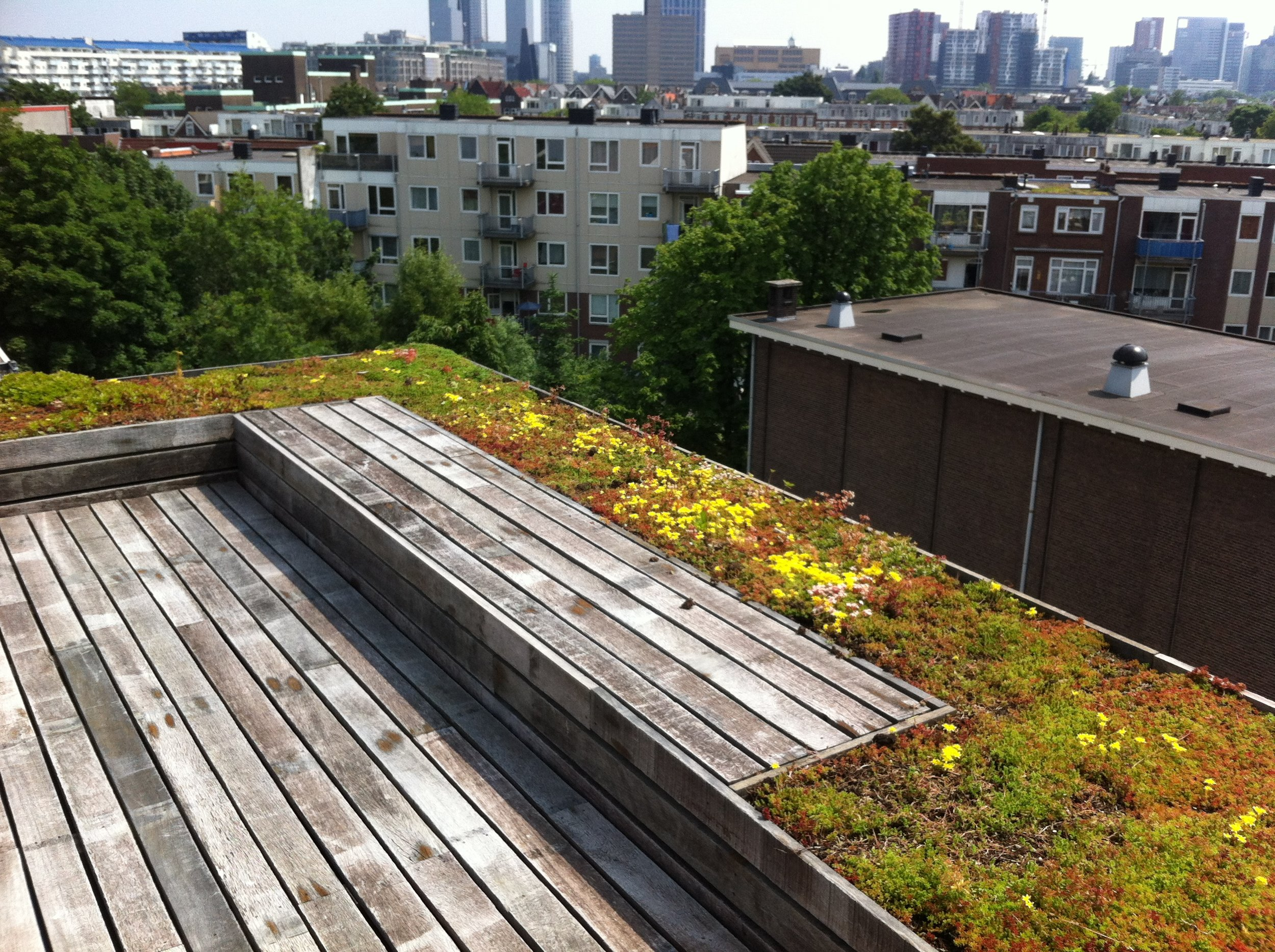 the roof terrace designed by EMMERIK garden design and research is confined within a large elevated green roof making it unnecessary to add a railing
