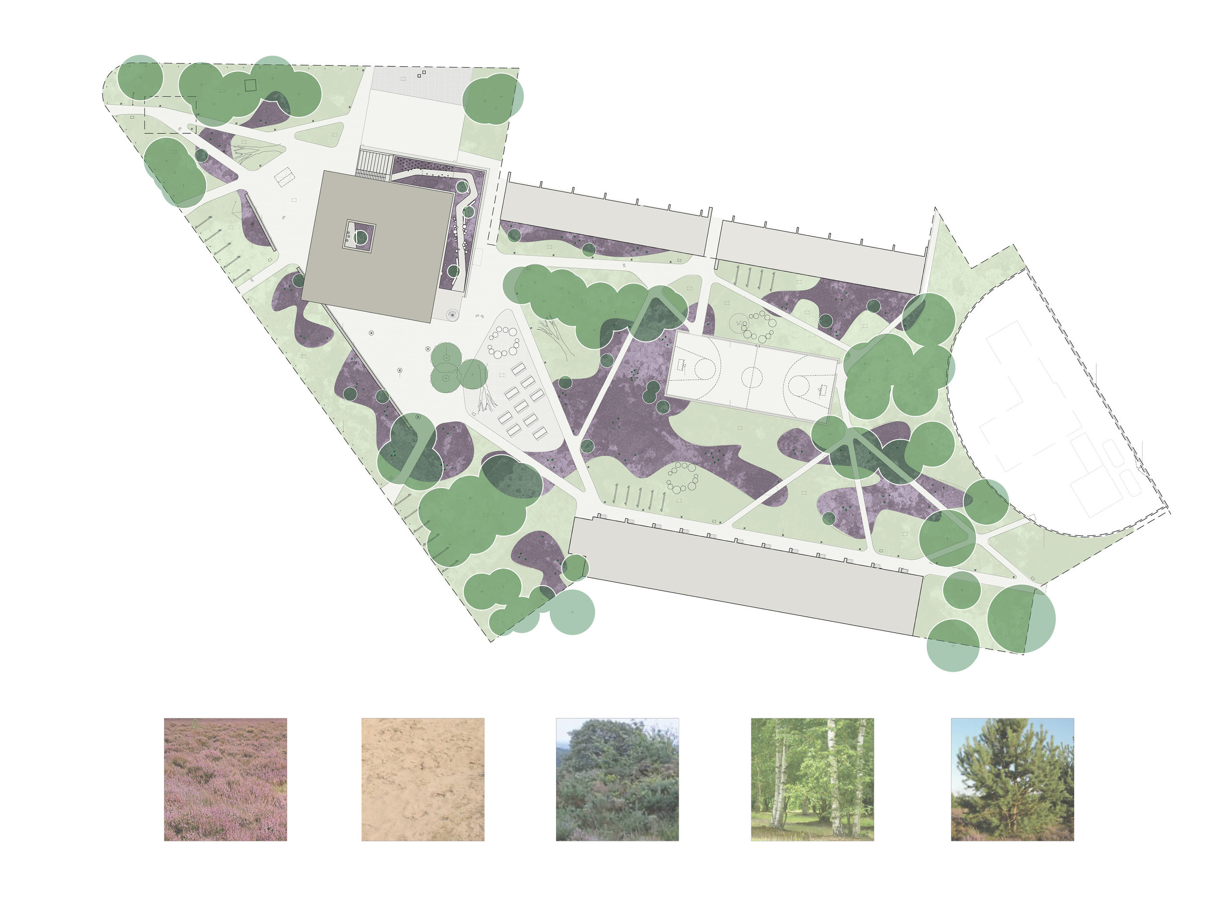 local biotope as inspiration for the landscape design: heath, sand, birch and fir trees