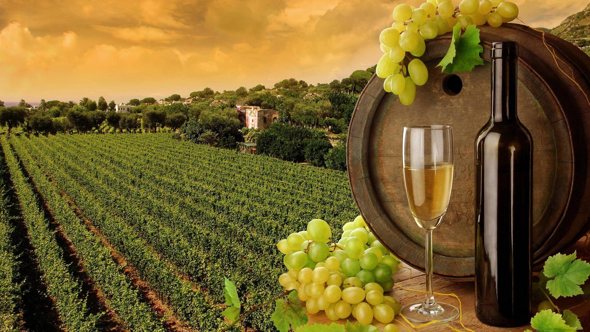 Macedonian Wines