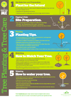 Tree Planting Quick Guide -