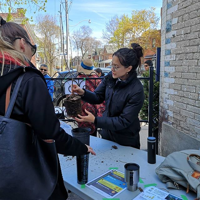 @green13toronto has your tree needs covered! They have 200 trees finding homes in the Junction today! Come out, get your tree and learn how to properly plant and care for it!  #treeforme