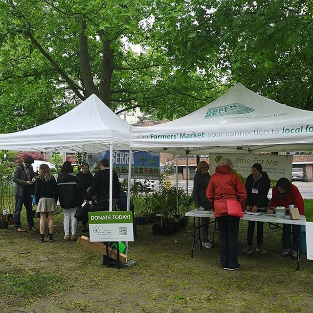 Today is the third Tree For Me event for the South Eglington Residents and Ratepayer Association! The rain doesn't bother us! #treeforme
