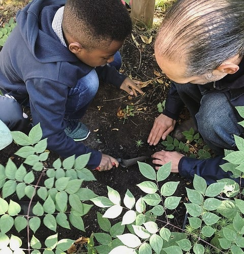 TPTF is proudly supporting a project led by @greenthumbsto that is getting elementary students engaged in growing trees from native seeds that will eventually be planted on TDSB school grounds. The students are learning about the importance of native species and protecting Toronto's ecosystems and the cultural significance of each species from local indigenous leaders. They are also using the  Anishnaabemowin, English and Latin names of each species they cultivate! So cool! 👏👏👏 .  Click the link in our bio to learn more about this awesome project. . #EveryTreeCounts #torontotrees #torontopfr