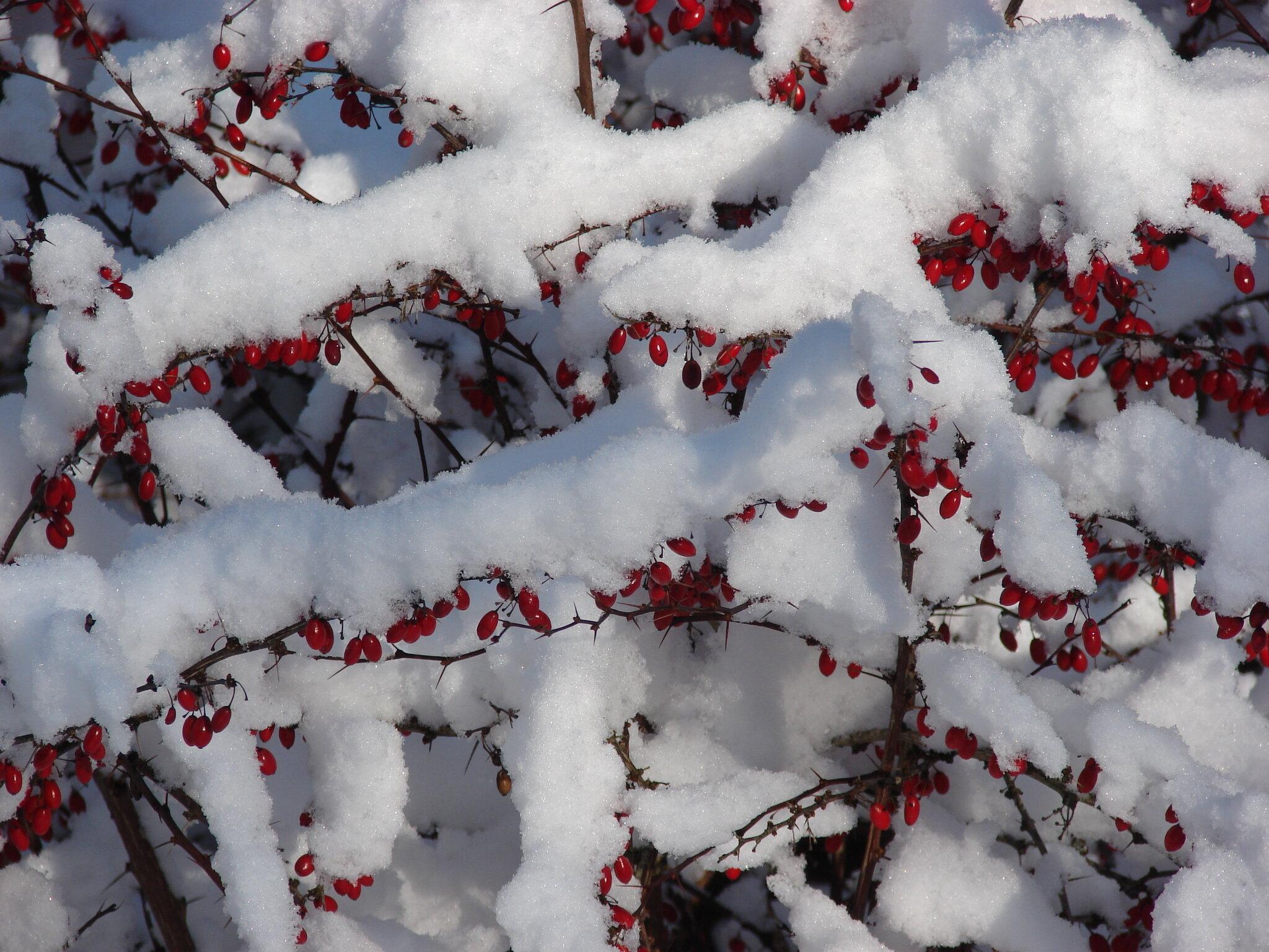 Winter Jansoulart