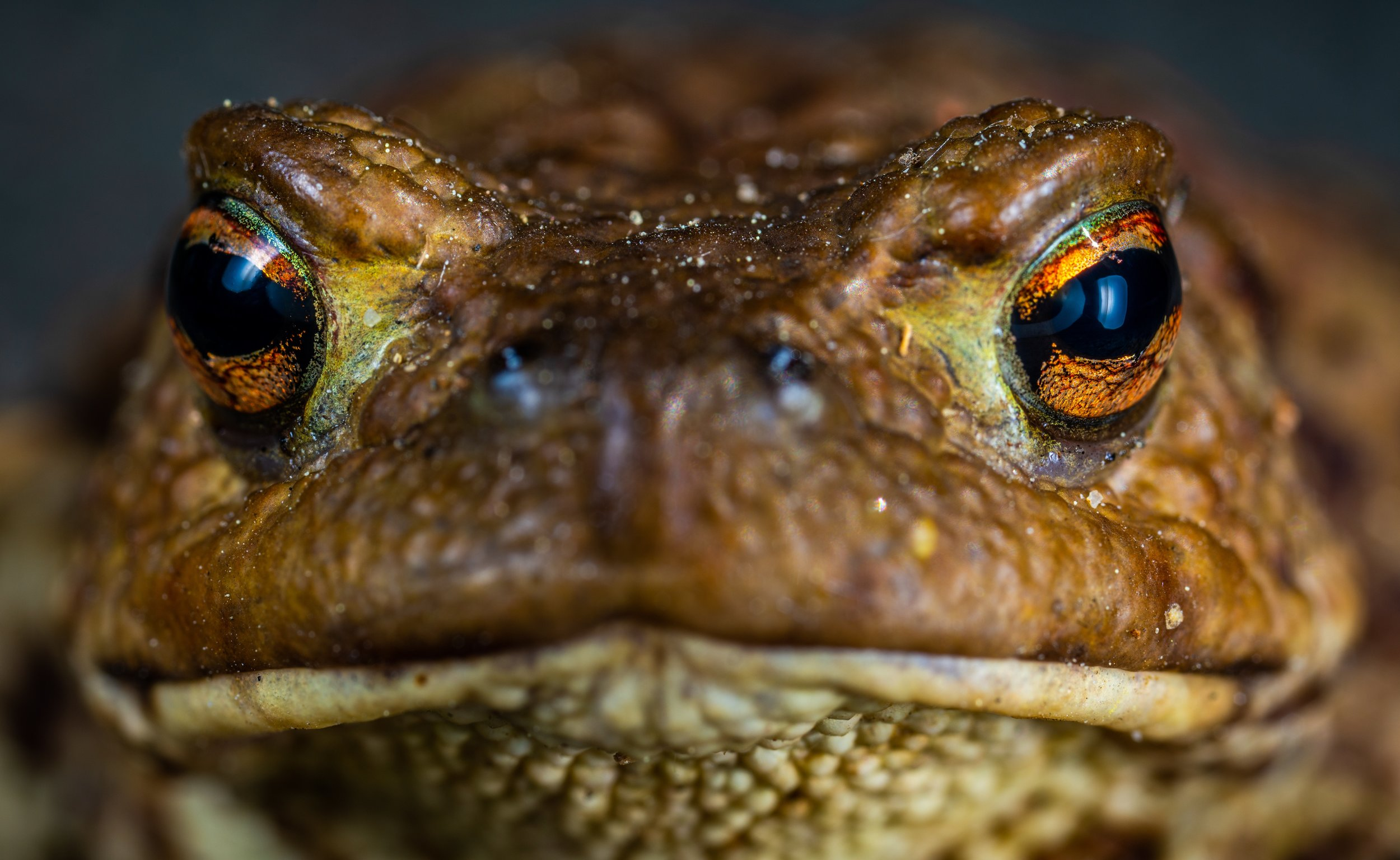 amphibian-animal-aquatic-1101196.jpg