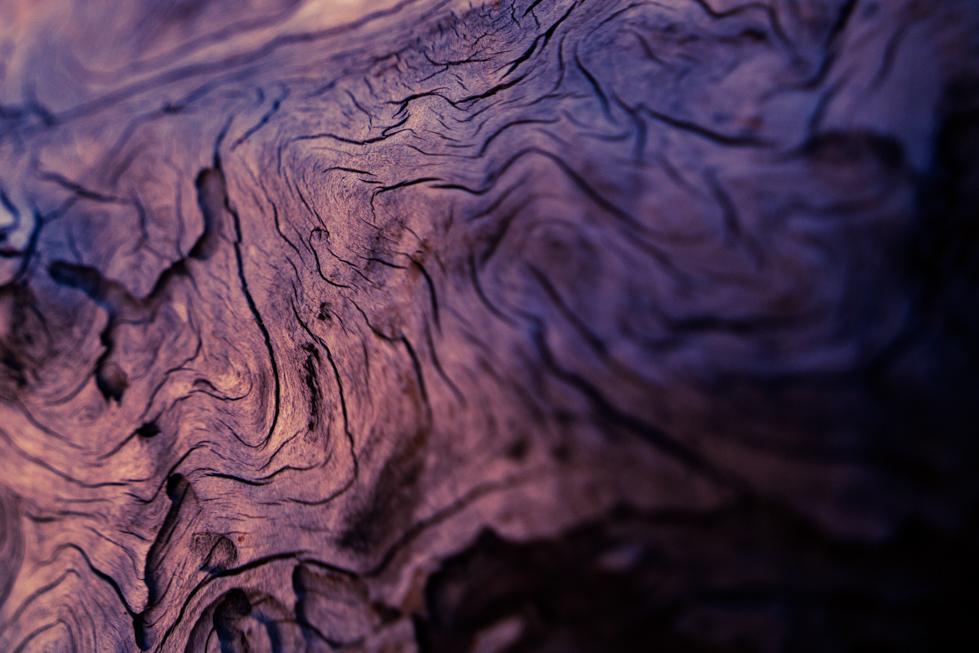 old wood yosemite