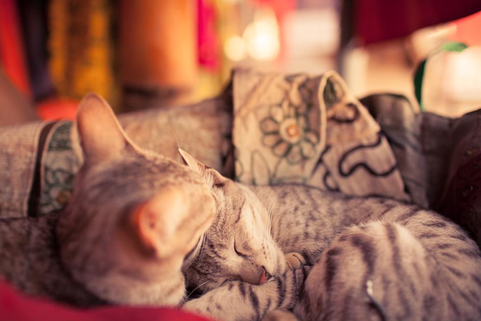 cute cats in a box