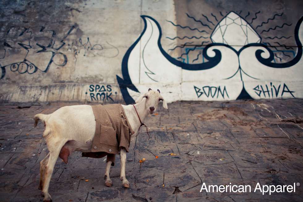 Hipster goat india