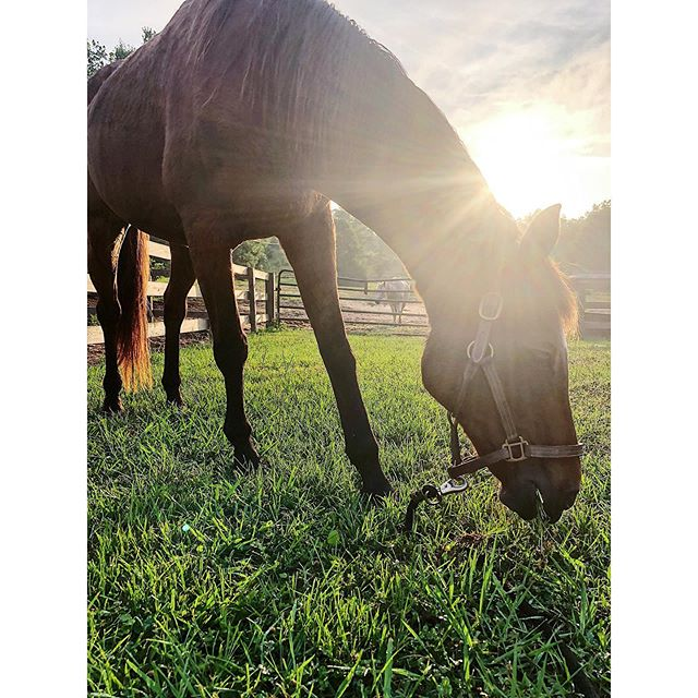 Another beautiful day at Stratford! • • • • • #welcometoourhouse #stratfordequestrianfarm #auburnalabama #waverlyalabama #retiredhorses #oldisthenewnew #oldisthenewyoung #bay #baysfordays #horses #ponies #greenacres #retirementhorses #weloveoldies