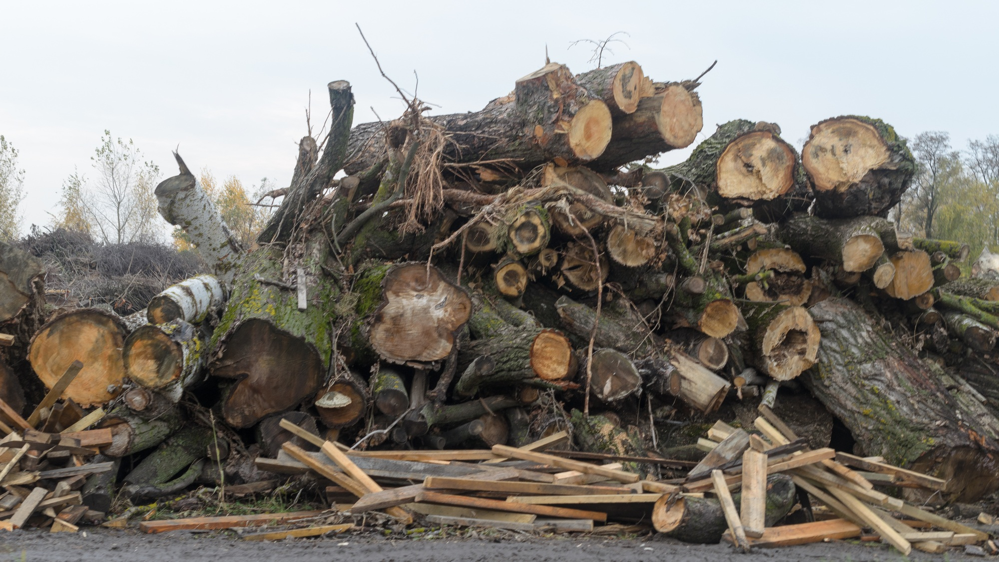 Wood waste from both logging and urban forests can be pelletized and used as thermal fuel and biochar feedstock.