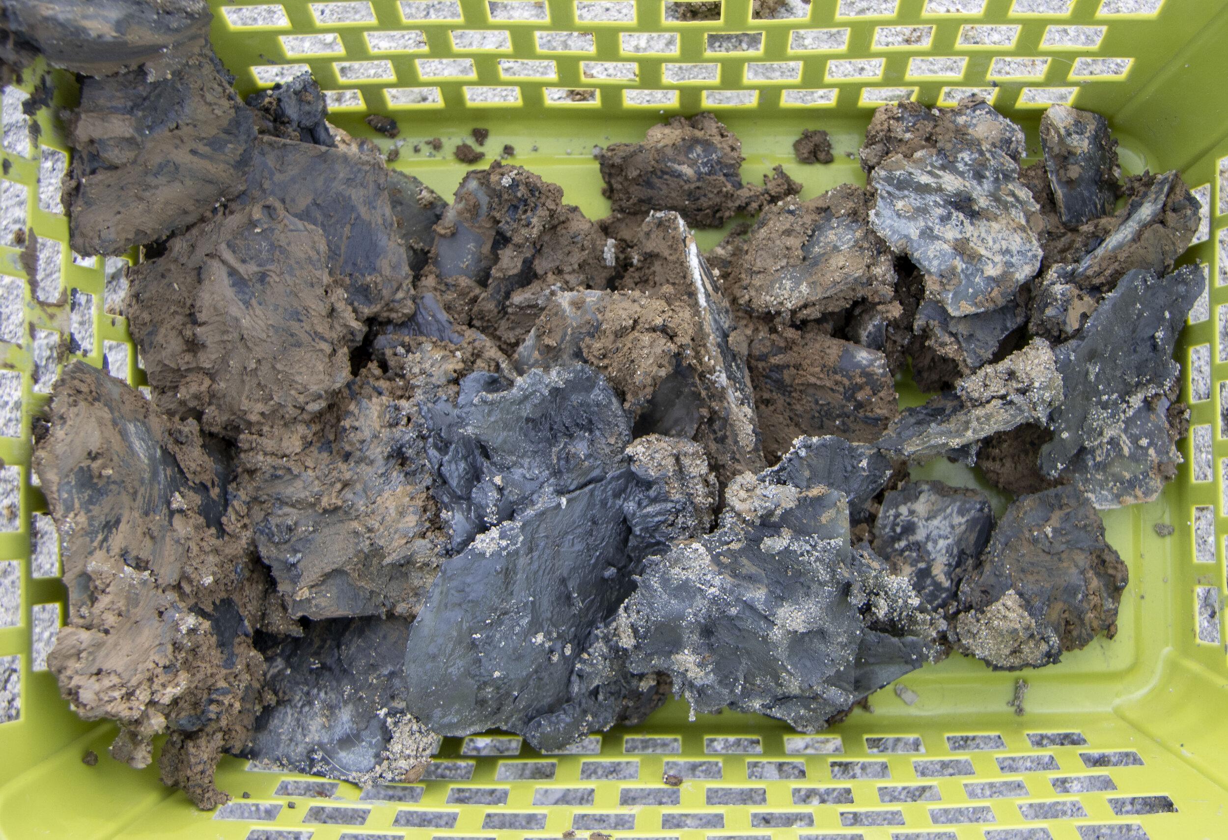 freshly harvested selenite crystals