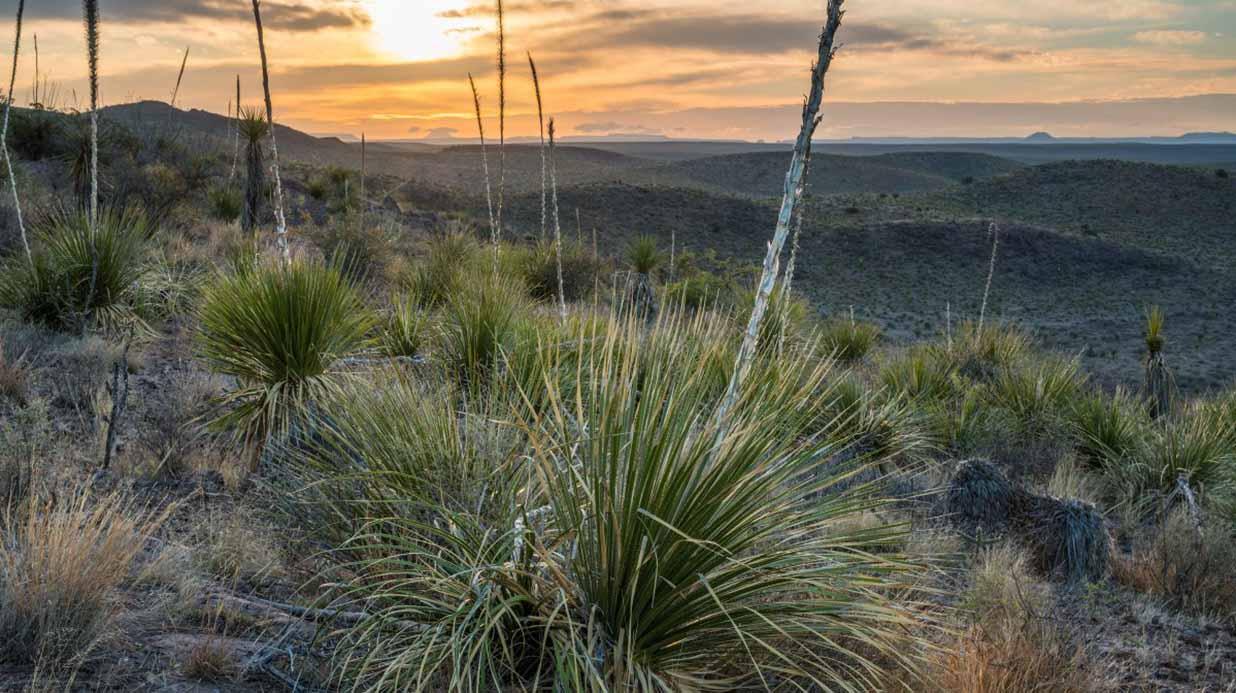 Black-Hills-Ranch-Presidio-TX-3146412a.jpg