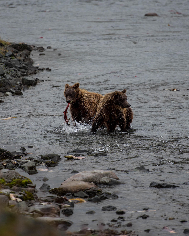 Alaska 2017 (5 of 16).jpg