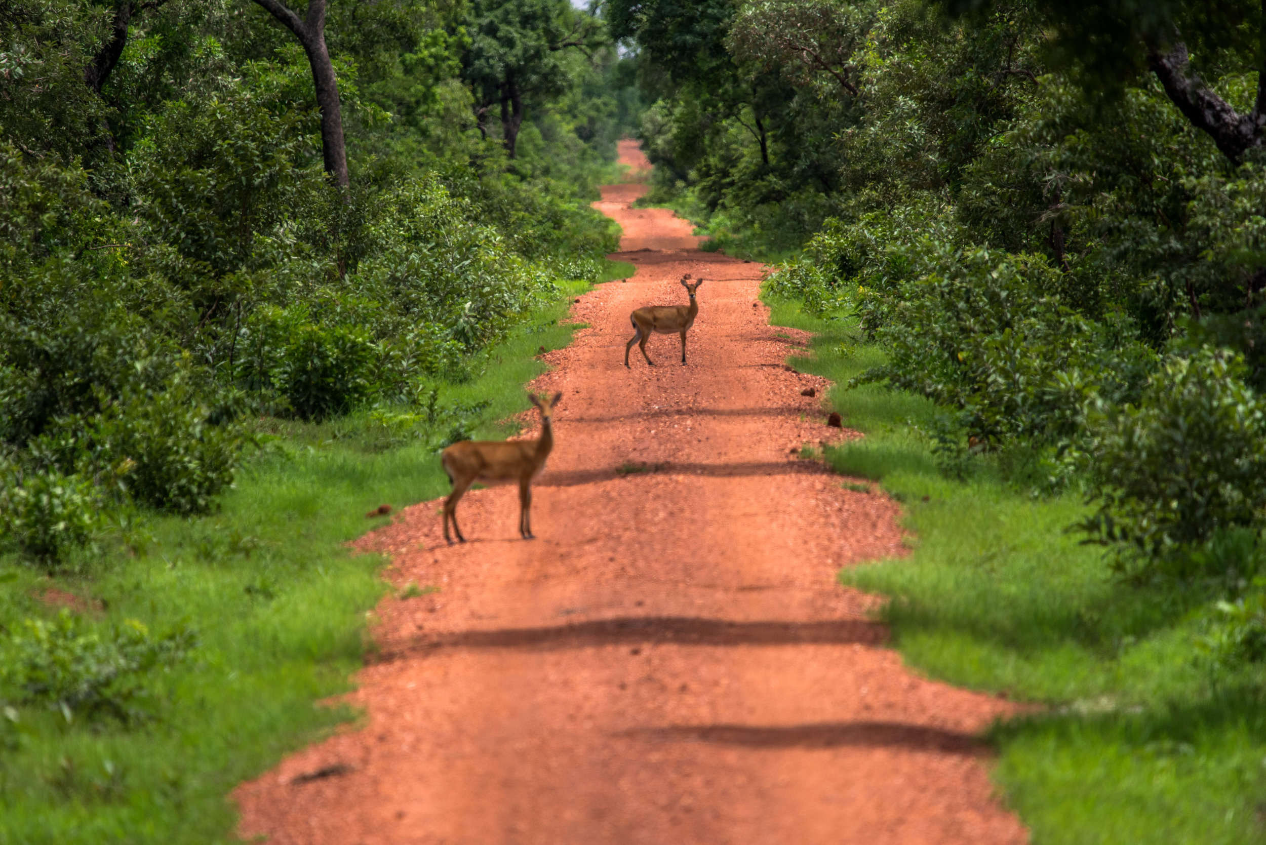 Mole National Park-9.jpg