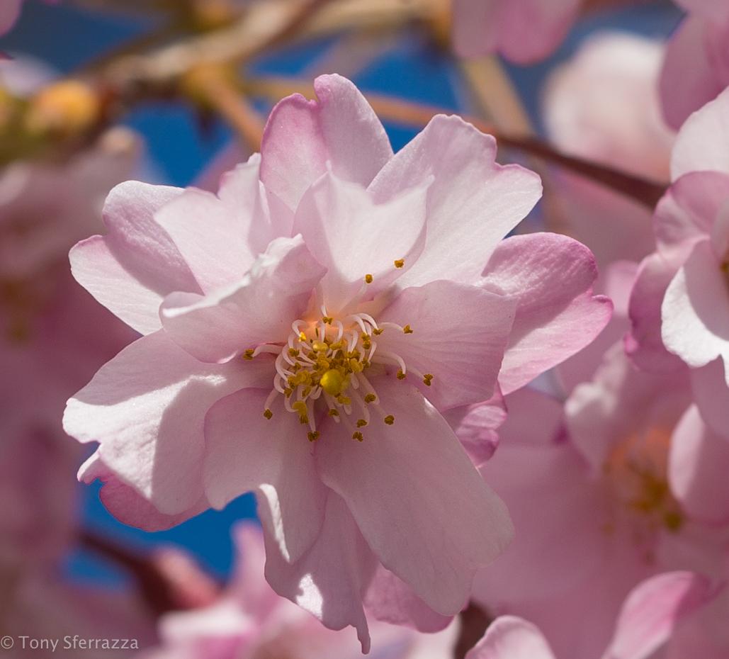Pretty is Pink (Macro)